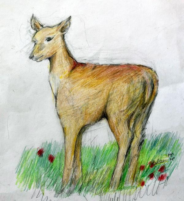 Deana Spring Drawing Workshop
